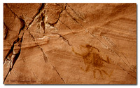 Insect Pictograph
